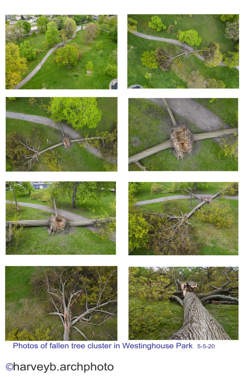Fallen Trees in Westinghouse Park